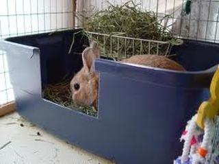 Rabbit litter tray